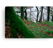 Forest in Keswick Canvas Print