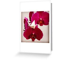 Tiny origami crane and orchid blooms Greeting Card