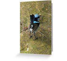 Bird on a rock. Greeting Card