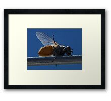 ©NS Wazzz Up IAT Framed Print