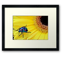 Harlequin in Yellow Framed Print