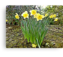Spring of nature... Canvas Print
