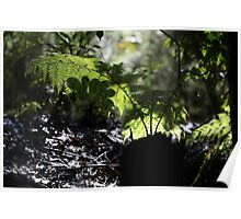 Rain forest undergrowth Poster