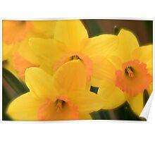 Softly Spring Poster