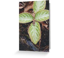Summer Nature Greeting Card