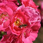 Natural Rose Bouquet  by Joy Watson