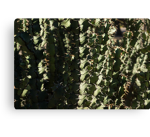 Sharp Shapes and Shadows - Cactus Garden Canvas Print