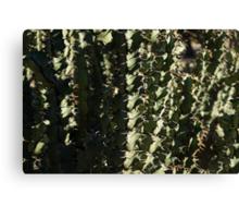 Sharp Shapes and Shadows - Cactus Garden Canvas Print