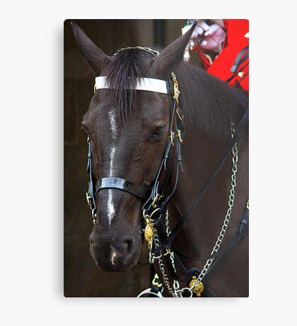 HORSE GUARD Metal Print