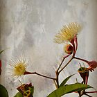 Dwarf White Flowering Gum by Elaine Teague