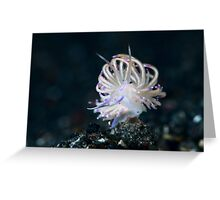 Jewel of the sea - 2 Greeting Card