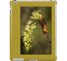 fresh popped big leaf maple bud, and bug iPad Case/Skin