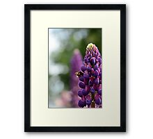 Purple Lupin and Friend Framed Print