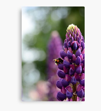 Purple Lupin and Friend Canvas Print