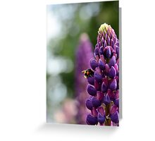 Purple Lupin and Friend Greeting Card