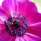 Anemone Close Up by hootonles
