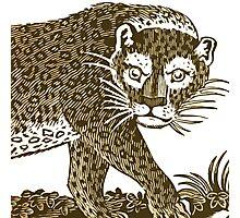 Jungle Cat Photographic Print