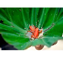 Red Frog Beach Photographic Print