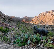 Tucson Mountains by Gordon  Beck