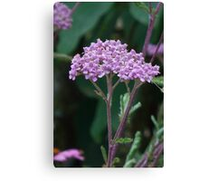 Pink flower cluster crown Canvas Print