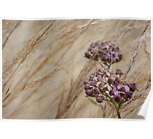 Wind Grass and Bloom Poster