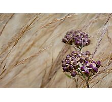 Wind Grass and Bloom Photographic Print