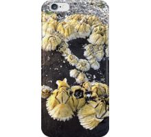Barnacles on a Rock ~ Bar Harbor, Maine iPhone Case/Skin