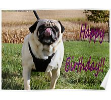 Puggy Birthday Poster