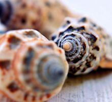 Still life - shells by Scott Mitchell