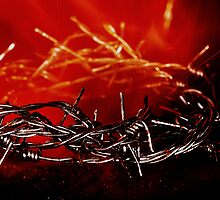 Crown of Thorns  by Darren Bailey LRPS