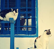 blue door and the cats by gzmguvenc89