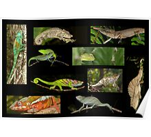 Chameleons composite Poster