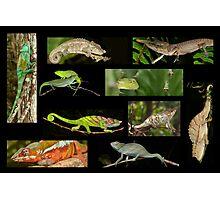 Chameleons composite Photographic Print