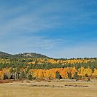Colorful Aspens in Hope Valley by Jared Manninen