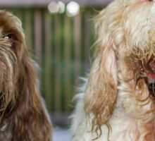 Italian Spinoni Dogs ~ Annabelle & Thane  Sticker