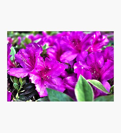 Purple Flowers in a Garden Photographic Print