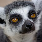 Lemur face by Sarah Grace
