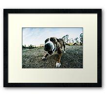 My Puppy Love Framed Print