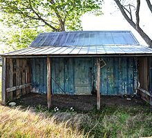 Old Shed by Savannah Gibbs