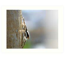 ©NS A Spider Life IVA Art Print