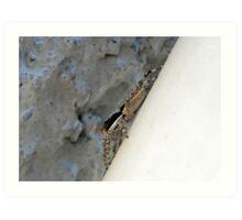 ©NS A Spider Life XIIA Art Print