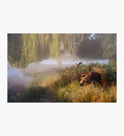 Morning Stag Photographic Print