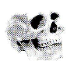 Skull Photographic Print