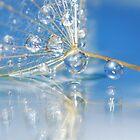 reflection drop by Christine Dyrnes