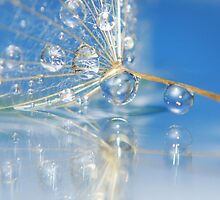 reflection drop by Christine Dyrnes