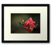 Natural Colours Framed Print