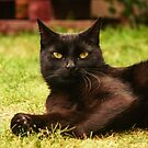 It is good to be a black cat by Caterpillar