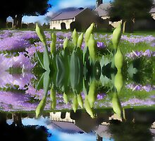 Church flowers in reflection by Robert Gipson