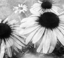 Infrared Coneflowers by SRowe Art