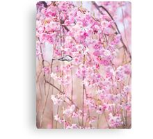 Black Cap Chickadee & Pink Weeping Willow Canvas Print